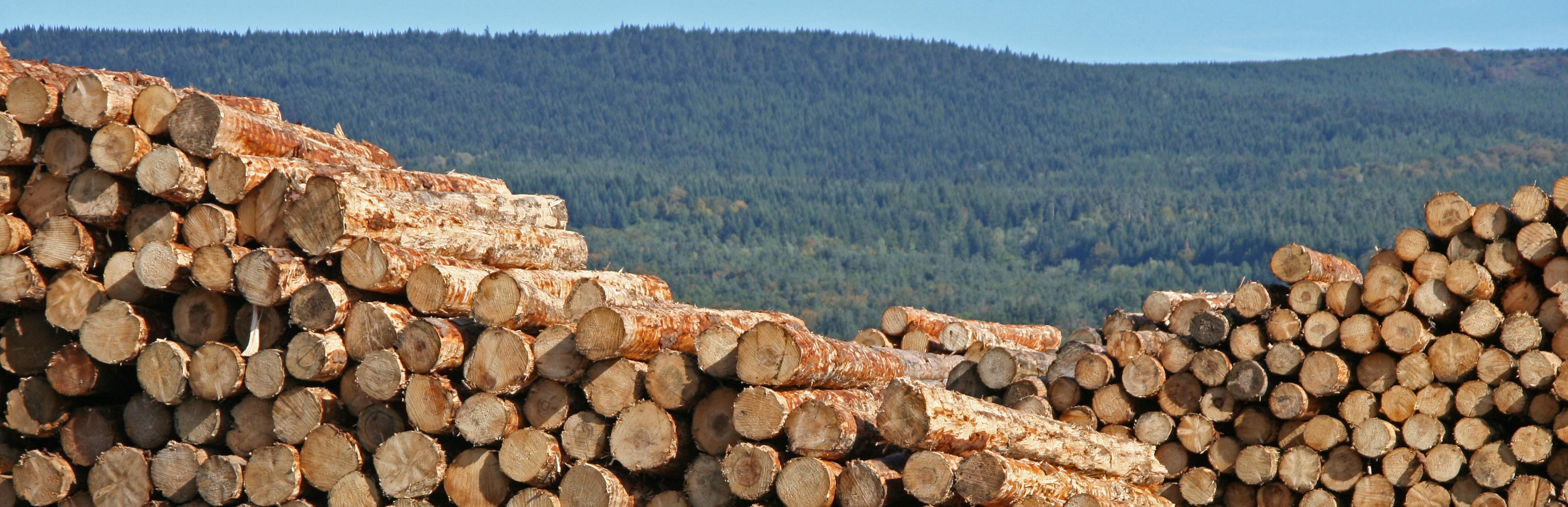 economie charte forestière
