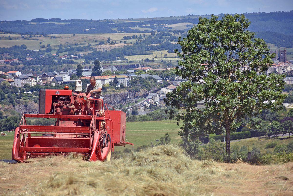 récolte de semences de prairies naturelles